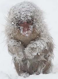 真っ白な猿